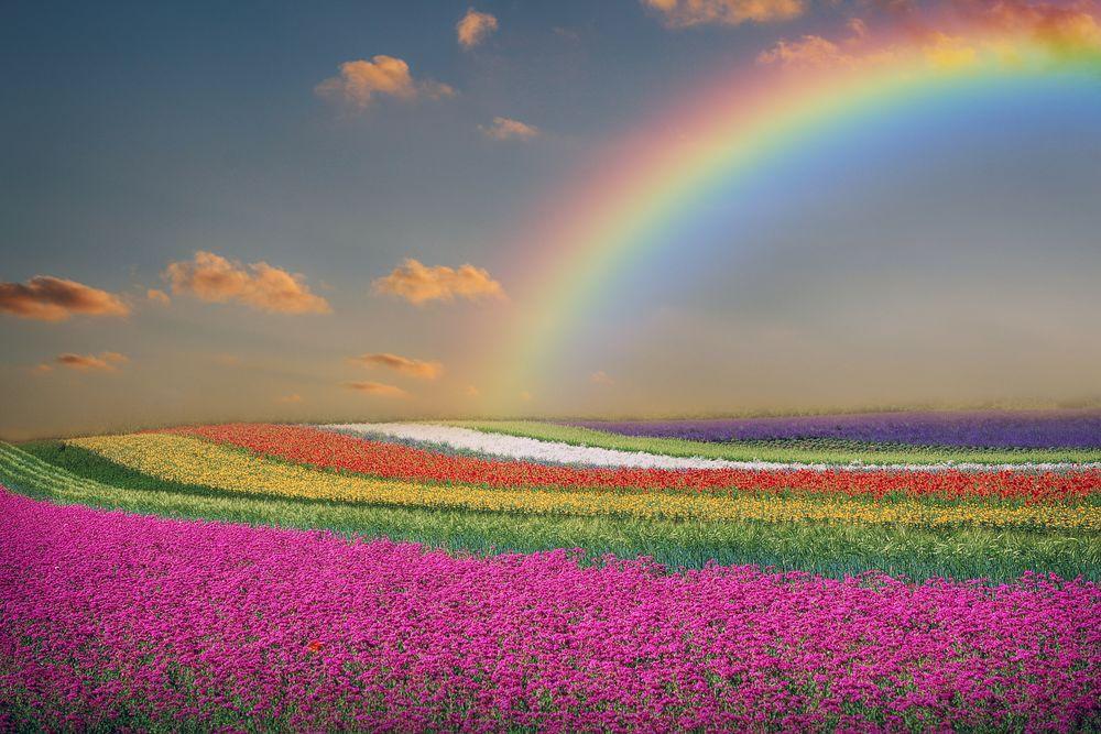 Ссоре, анимация радуга над полем