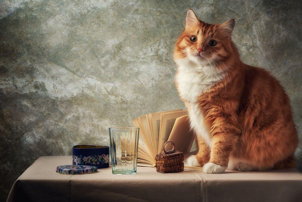 Обои для рабочего стола Рыжий кот сидит на столе, рядом лежит открытая книга, стоит плетеная шкатулка, стакан и железная коробка