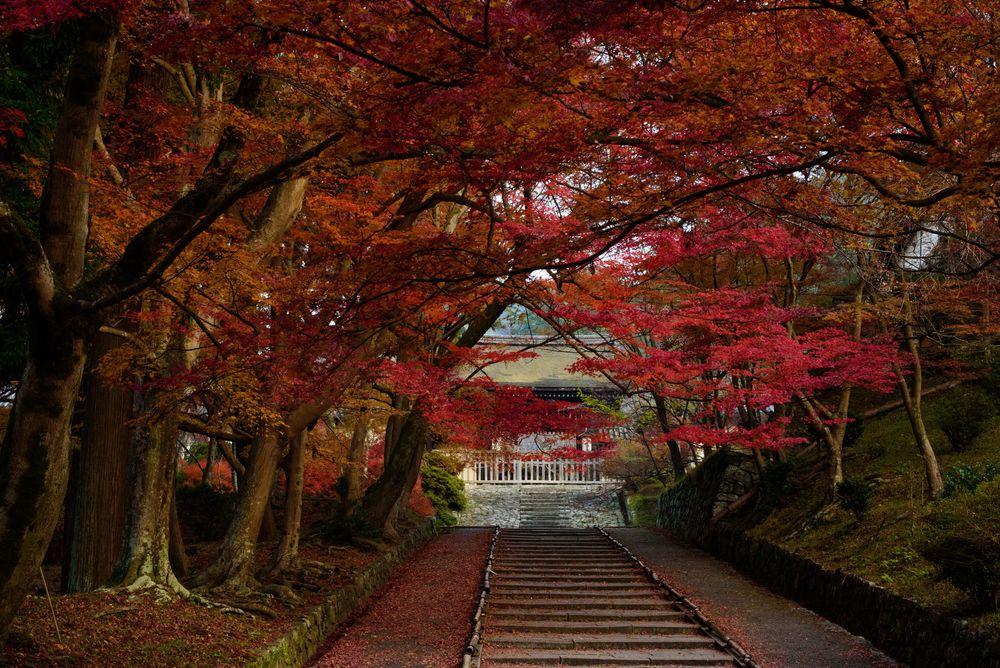 Обои для рабочего стола Аллея в осеннем парке, ведущая к храму, Japan / Япония