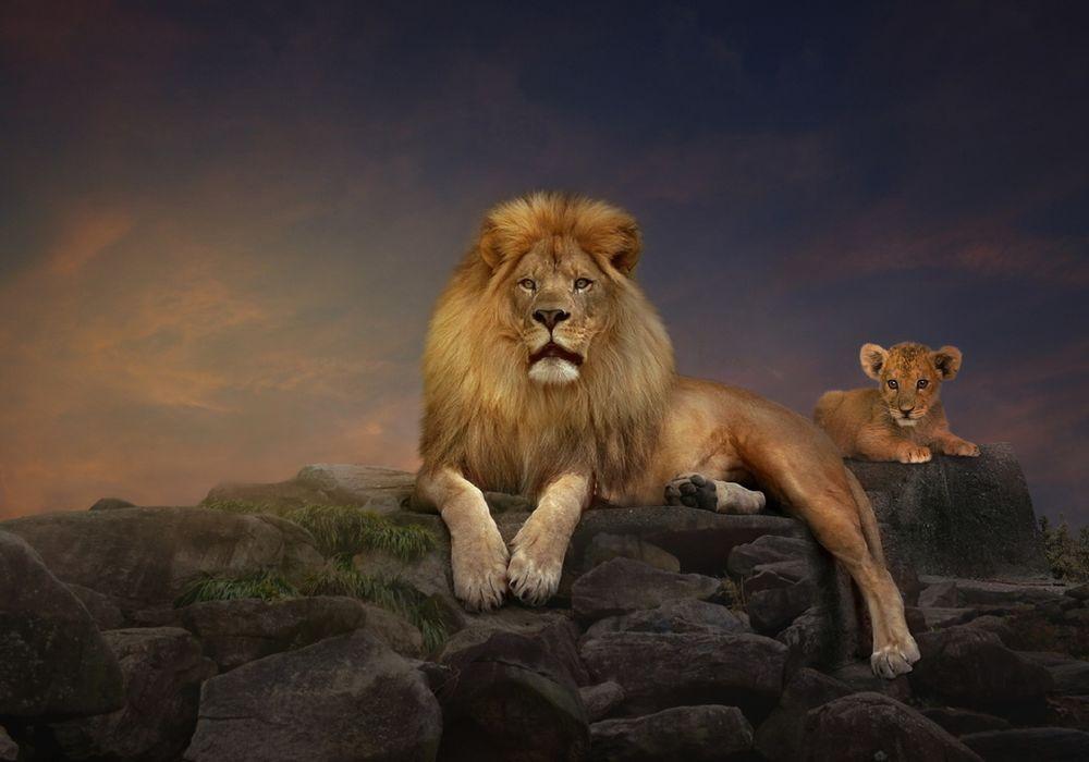 лев на скале картинки