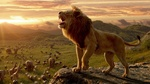 Обои Simba / Симба из мультфильма The lion king / Король лев (2019)