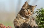 Обои Кот охотится за шмелем