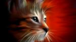 Обои Кот на красном фоне, by VictorImaginator