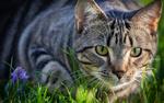 Обои Кошка лежит на траве