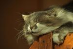 Обои Кот спящий на заборе, by Светлана Бердник