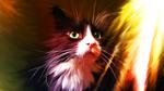 Обои Зеленоглазый черно-белый кот, by VictorImaginator