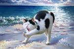 Обои Черно-белая кошка у моря, by okiochan