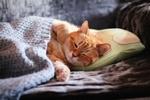 Обои Рыжий с белым котенок, засыпающий на подушке