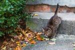 Обои Полосатый котенок спускается по каменным ступенькам играть с осенними листьями