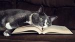 Обои Черно-белый кот лежит на раскрытой книге