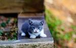 Обои Котенок с голубыми глазами сидит на скамейке