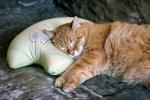 Обои Рыжий кот спит на подушке