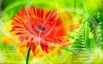 Обои Красный цветок на фоне с абстрактными разводами