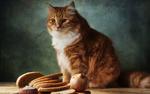 Обои Рыжая кошка сидит на столе перед нарезкой хлеба и другой еды, фотограф Геннадий Варжен