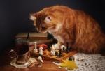 Обои Рыжий кот смотрит на стакан чая, сидя на столе и поставив передние лапки на шахматную доску