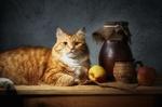 Обои Рыжий кот лежит на столе, рядом стоит крынка, чашка и лежат два яблока