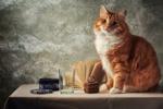 Обои Рыжий кот сидит на столе, рядом лежит открытая книга, стоит плетеная шкатулка, стакан и железная коробка