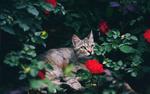 Обои Кошка в цветах