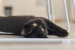 Обои Черный кот лежит на полу