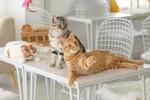 Обои Три кошки на столе