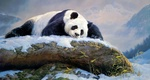 Обои Панда лежит на заснеженном валуне, художник Nancy Glazier