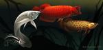 Обои Рыбы в воде, by Tikall