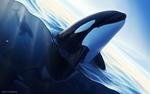 Обои Дельфин в воде, by Ciorano