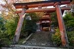 Обои Традиционные красные ворота тории с лестницей к храму, Japan / Япония