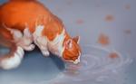 Обои Рыже-белая кошка лакает воду с лужи, by Followthepaws