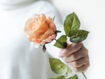 Обои В руке девушки роза