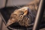 Обои Спящий на стуле кот, by Evan Semuta