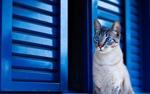 Обои Кошка сидит у ставен, фотограф Lucas Pezeta