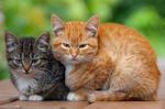 Обои Два котенка (тигрового окраса и рыжий) лежат на лавке и смотрят в камеру