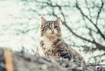 Обои Кошка на фоне веток дерева, фотограф Andrii Podilnyk