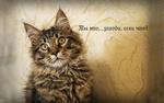 Обои Пушистый серый кот приглашает в гости, фотограф Yuriy Kovalev, (Ты это, заходи, если что!)