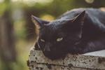 Обои Черная кошка лежит на бетонном заборе, фотограф Kazuky Akayashi