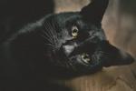 Обои Черная кошка смотрит на нас, фотограф Kazuky Akayashi