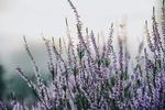 Обои Полевые цветы на размытом фоне