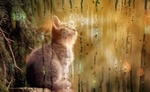 Обои Котенок сидит у веток сосны за запотевшим окном