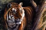 Обои Тигр стоит у сухого дерева, художник Kim Thompson