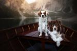 Обои Две собаки в лодке, by Dackelpup