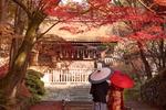 Обои Пара под зонтиками в японской одежде стоят спиной перед хромом в ясный осенний день, Kyoto / Киото, Japan / Япония
