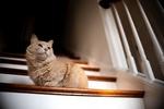 Обои Пушистая кошка сидит на ступеньках, by Erda Estremera