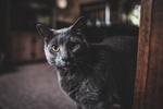 Обои Черный кот у двери, by allison christine