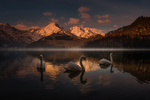Обои Лебеди на озере, фотограф Friedrich Beren