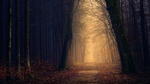 Обои Дорожка в сумрачном туманном осеннем лесу