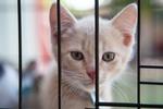 Обои Котенок за решеткой, фотограф Shaun Meintjes