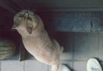 Обои Кот стоит у двери, фотограф Eduard Delputte