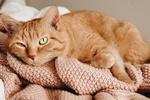 Обои Рыжий котик лежит на вязанной вещи