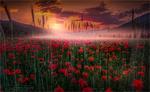 Обои Поле красных маков с легким туманом, Friedrich Beren